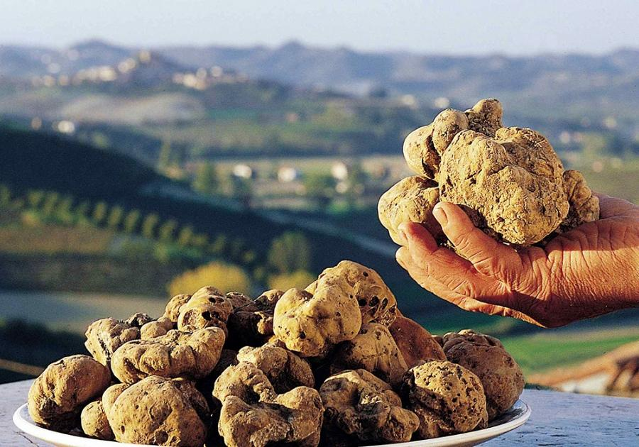 Istria holds Guinness World Record for the biggest truffle ever – 1.31 kg